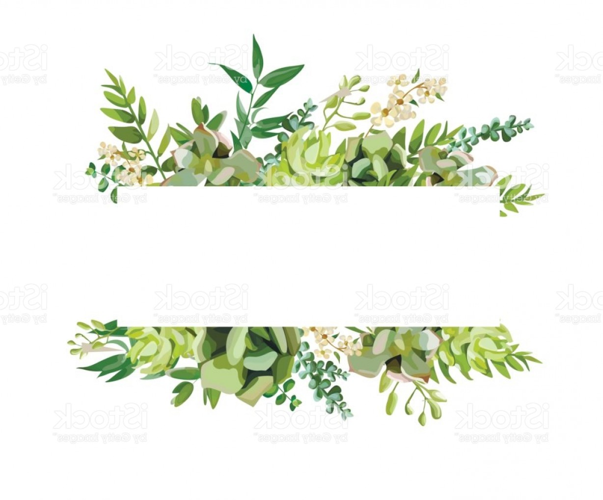 Cactus And Flower Vector: Vector Floral Design Horizontal Card Design Soft Succulent Cactus Flower Garden Gm