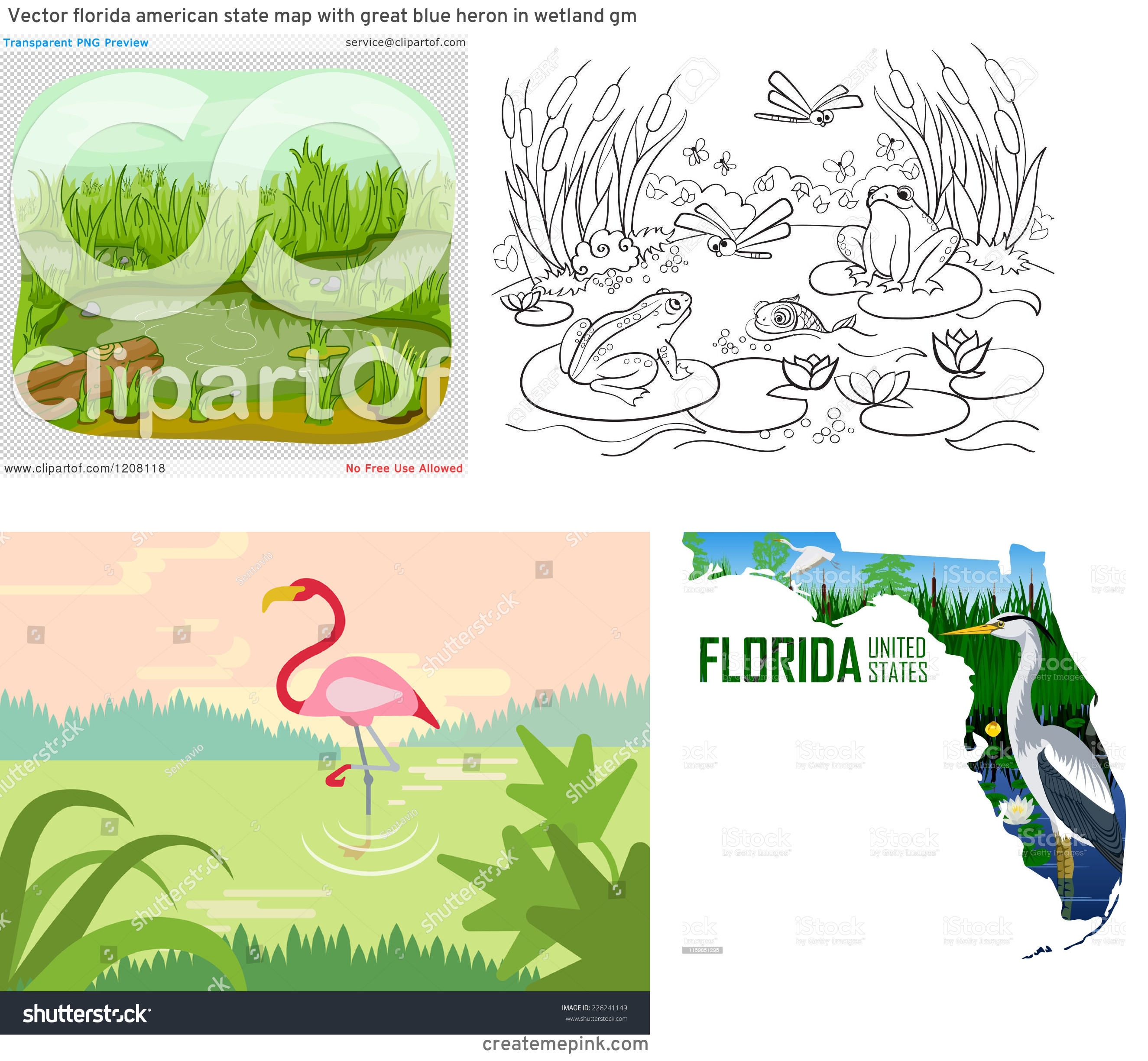 Vector Wetland: Vector Florida American State Map With Great Blue Heron In Wetland Gm