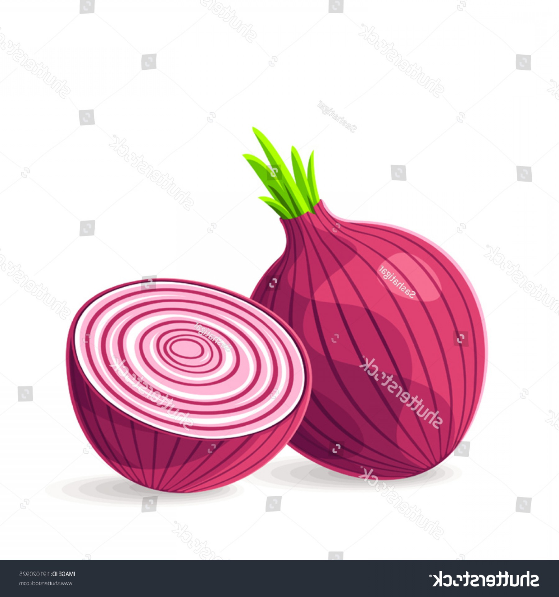 Onion Vector: Vector Fresh Red Onion On White