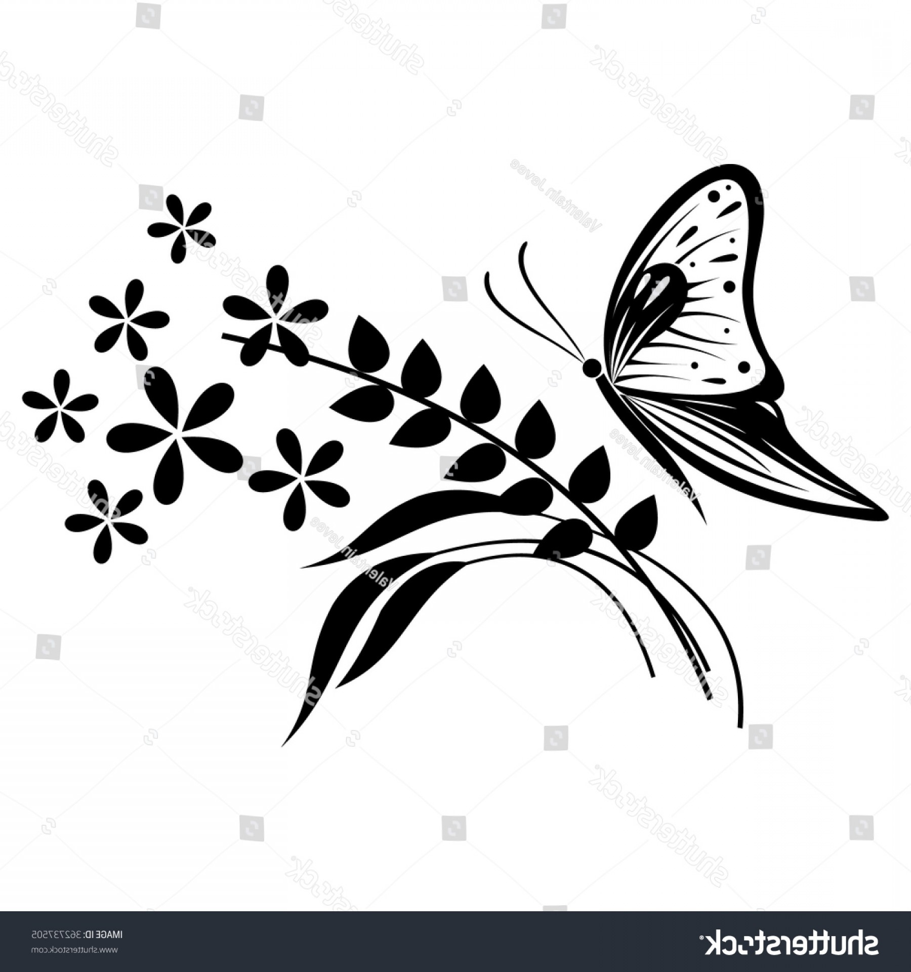 Butter Fly And Flower Vector Black And White: Vector Illustration Insect Black White Butterfly