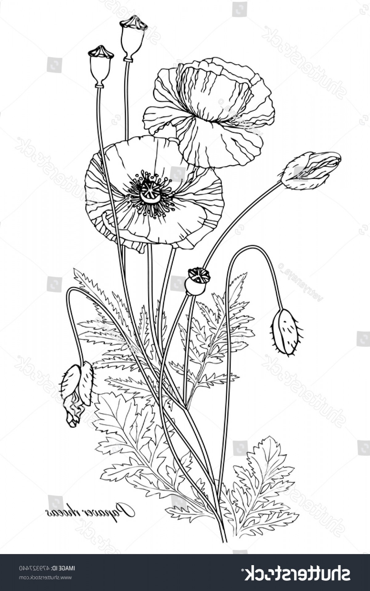 Seed Flower Vectors: Vector Illustration Linear Botanical Flowers Buds