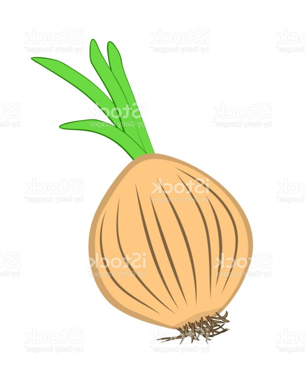 Onion Vector: Vector Illustration Of Isolated Onion Gm