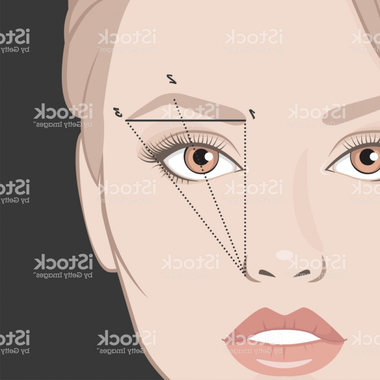 Vector Face Mapping: Vector Illustration Of Woman Face And Eyebrow Mapping Gm