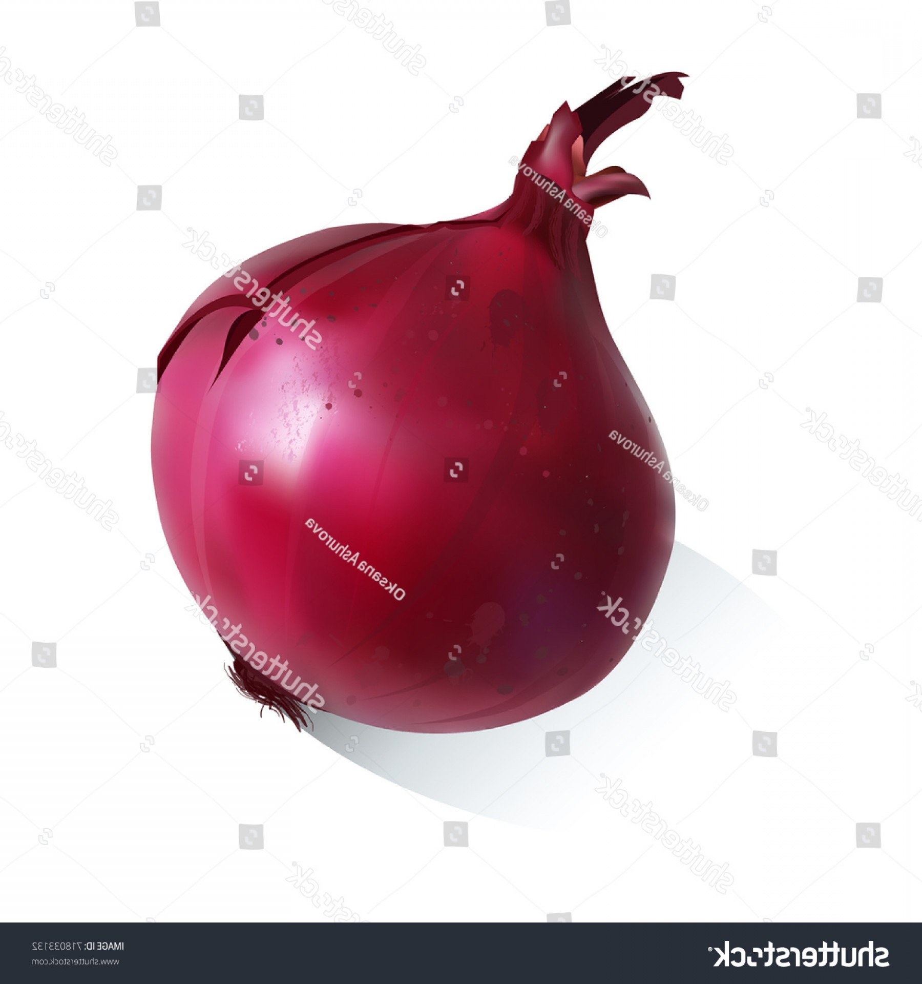 Onion Vector: Vector Illustration Red Onion Isolated On