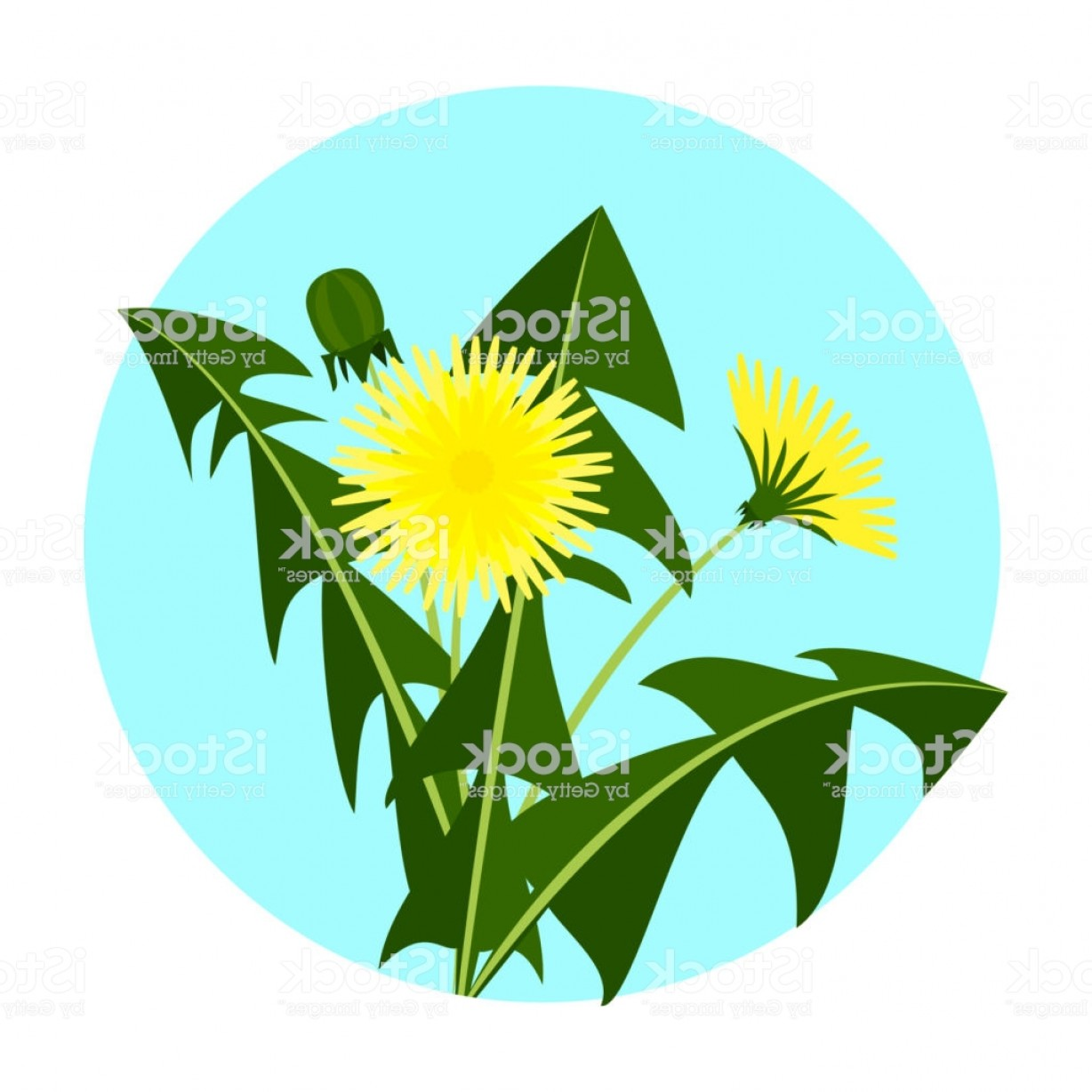 Floral Vector Icon: Vector Illustration Yellow Dandelions With Leaves And Flower Dandelion Vector Icon Gm