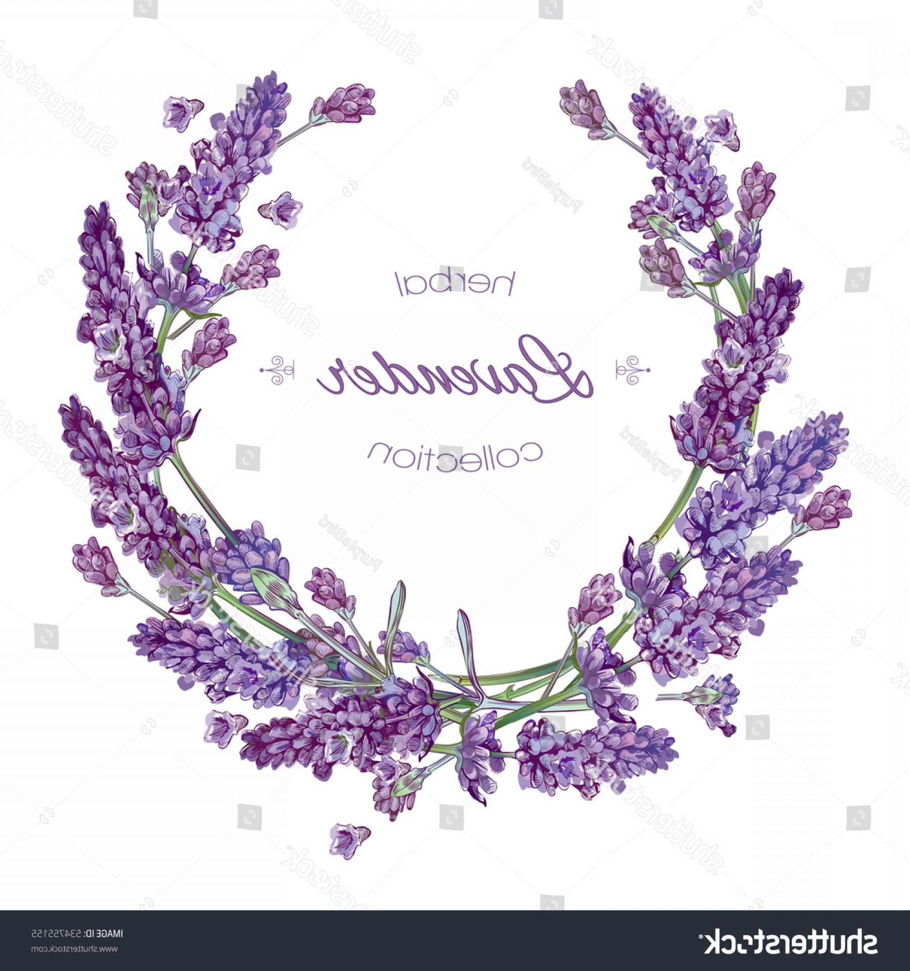 Lilac Wedding Vectors: Vector Lavender Flower Round Frame On