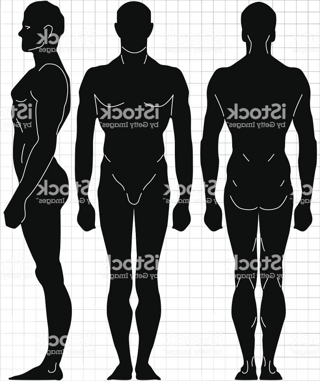 Male Human Vector: Vector Male Human Body Proportion Gm