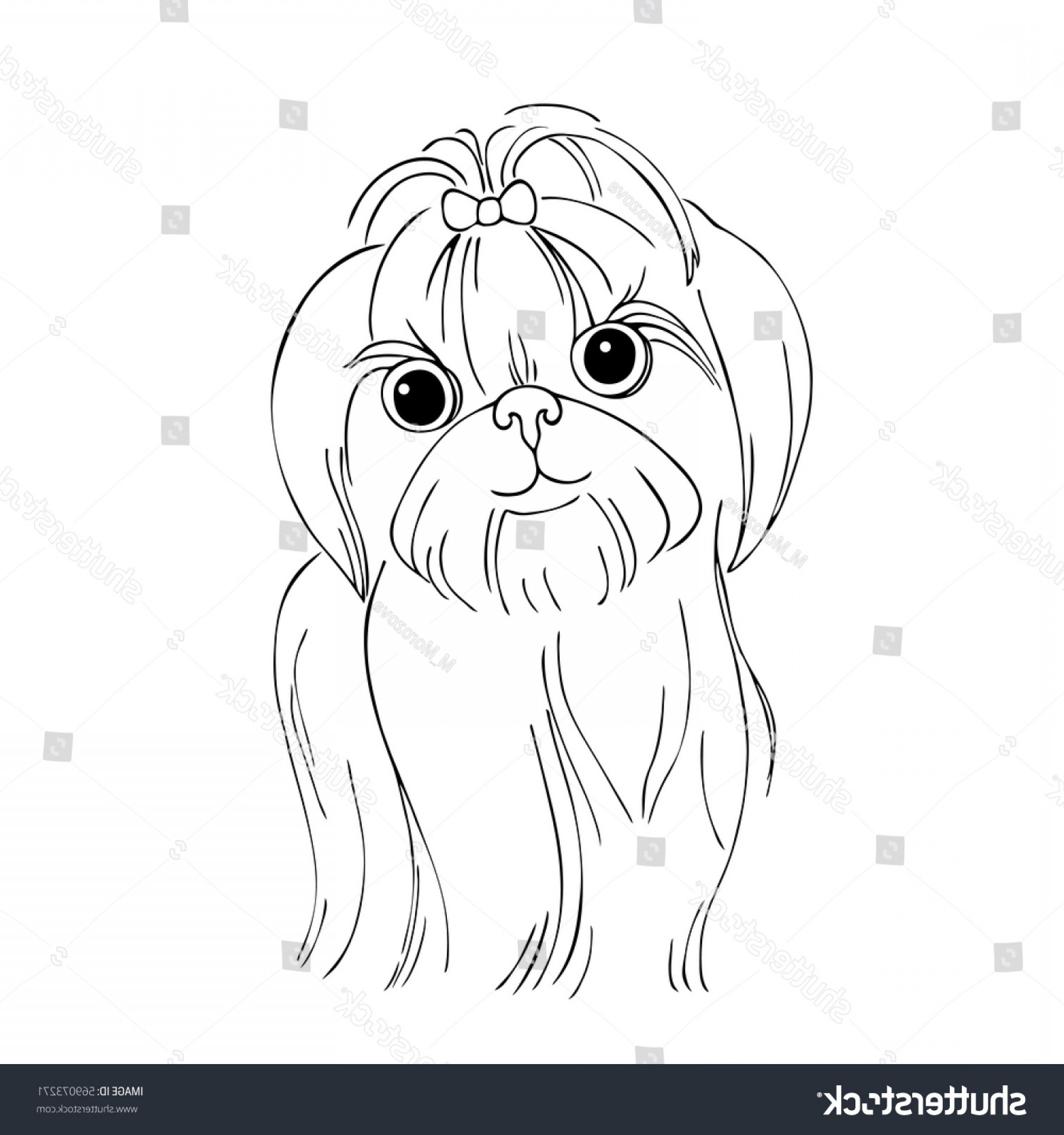 Shih Tzu Vector Siluete: Vector Monochrome Contour Illustration Shihtzu Dog