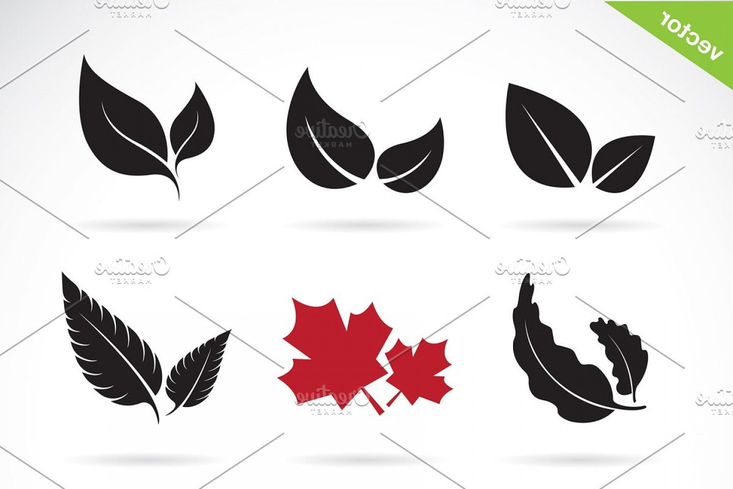 Vector Leaf Graphicd: Vector Of A Leaves Icon Set
