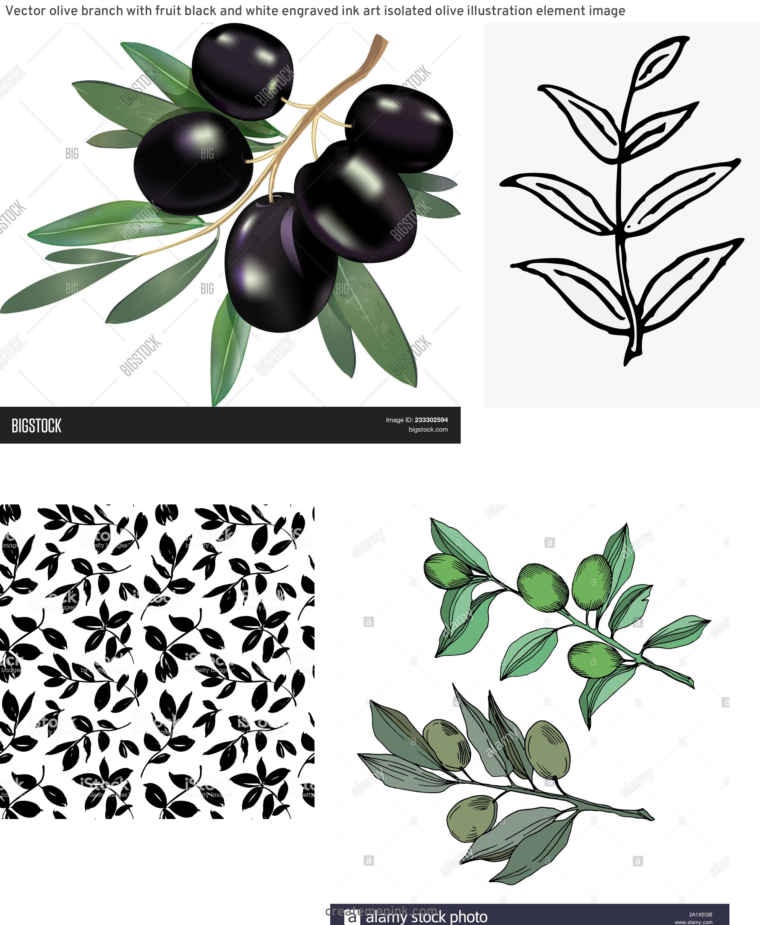 Olive Black And White Vector Leaves: Vector Olive Branch With Fruit Black And White Engraved Ink Art Isolated Olive Illustration Element Image