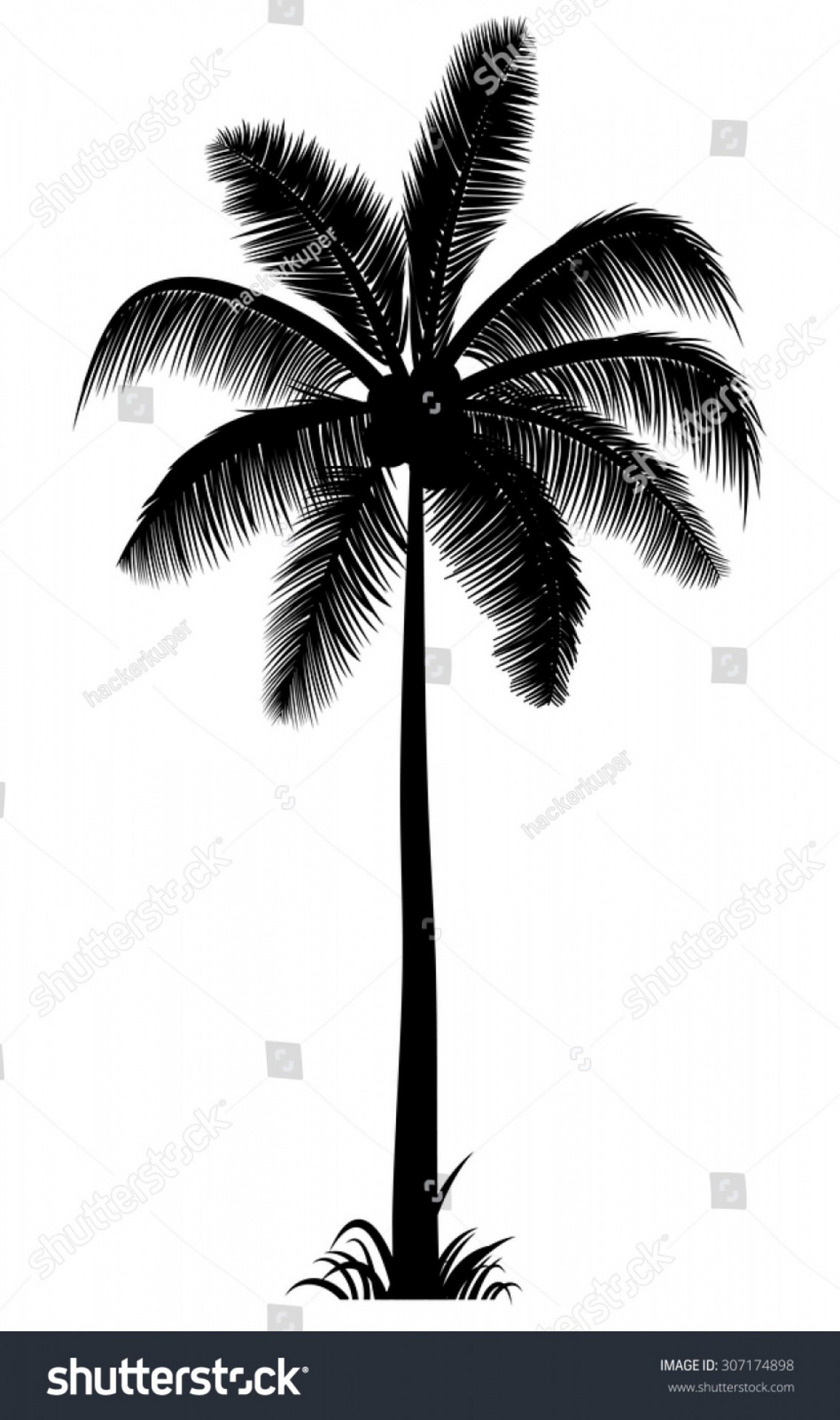 Watercolor Palm Tree Vector: Vector Realistic Palm Tree Silhouette Black