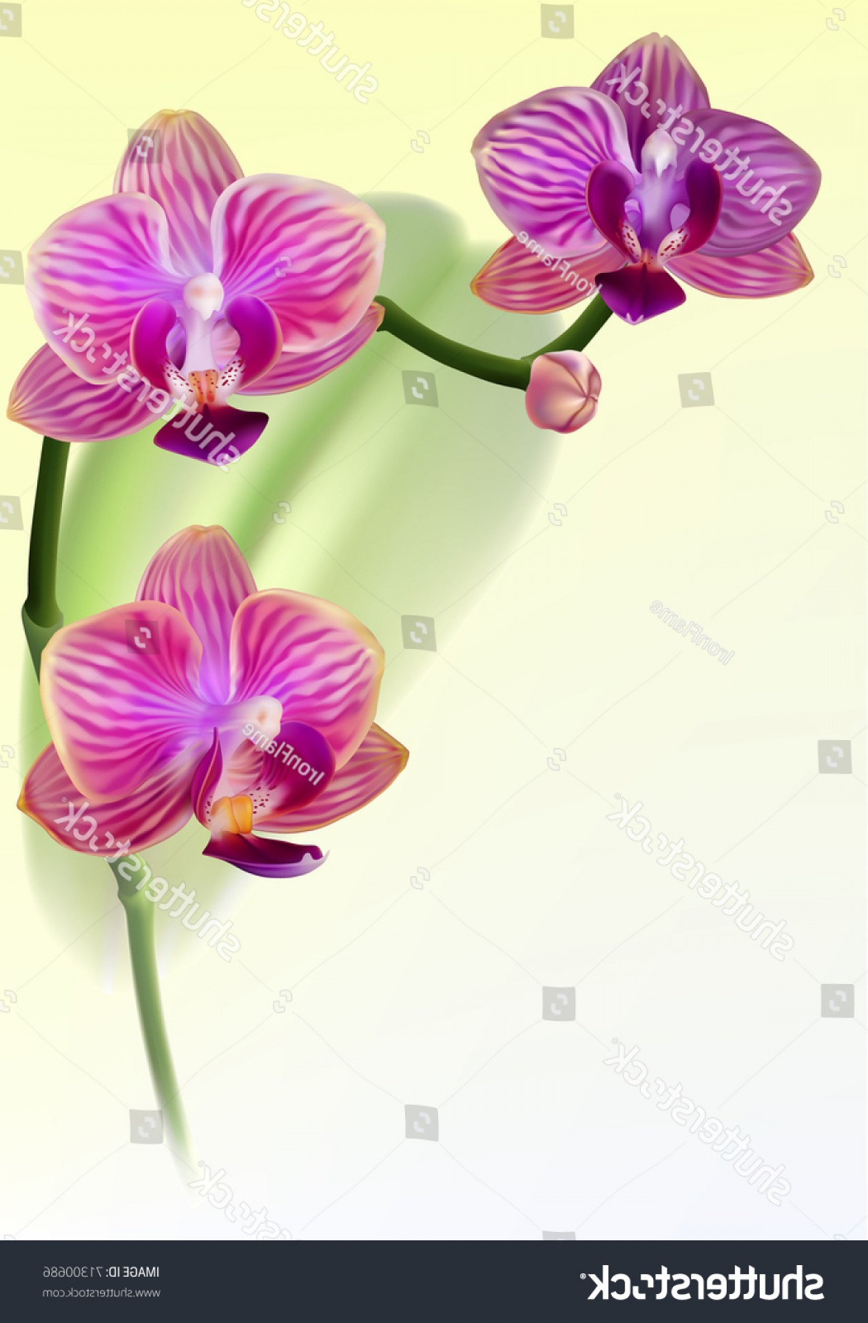 Purple Orchid Vector: Vector Realistic Purple Orchid Flower On