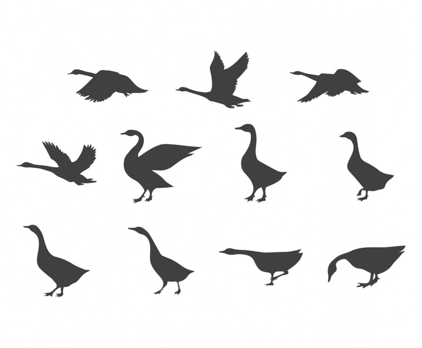 Swan Silhouette Vector: Vector Set Of Swan Silhouettes