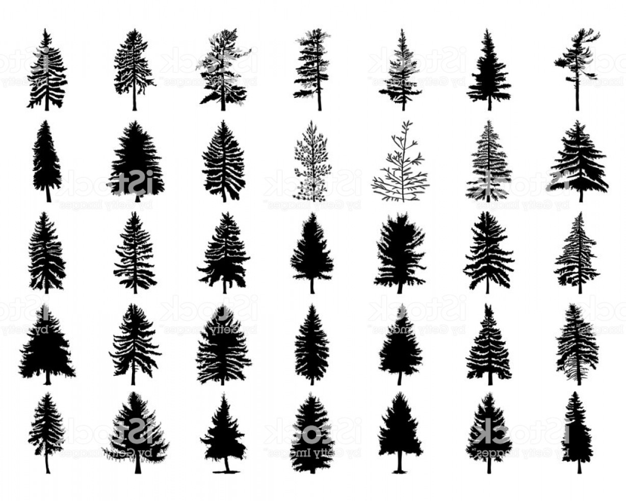 Pine Tree Vector Format: Vector Set Silhouette Of Different Canadian Pine Trees Conifer Tree Silhouettes On Gm
