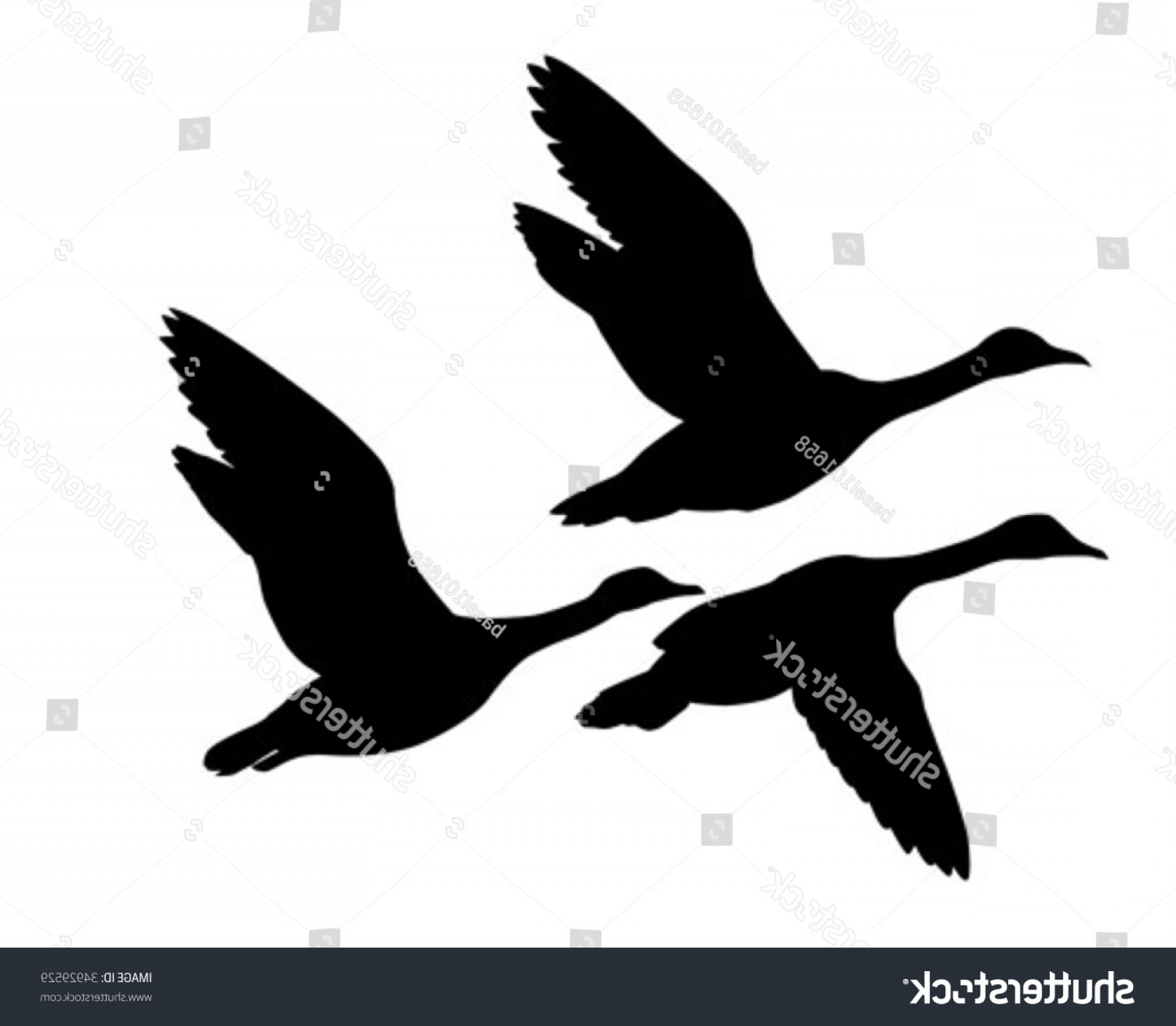 Geese Vector: Vector Silhouette Flying Geese On White