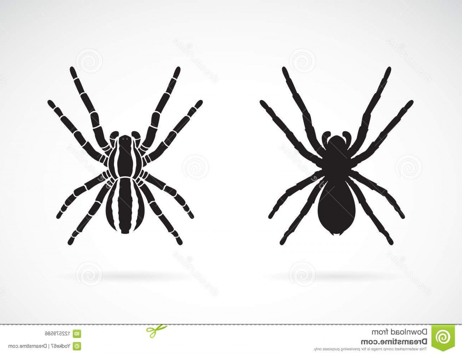 Easy Spider Vector Illustration: Vector Spider White Background Insect Animal Easy Editable Layered Illustration Image