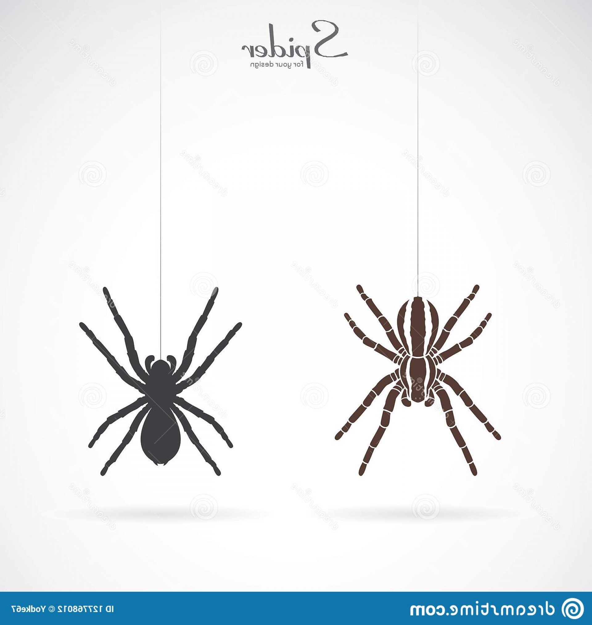 Easy Spider Vector Illustration: Vector Spider White Background Insect Animal Spider Icon Easy Editable Layered Vector Illustration Vector Spider White Image