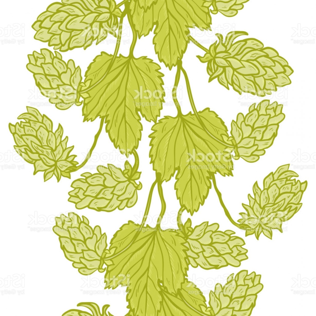 Beer Hops Vector: Vector Vertical Seamless Border With Beer Hops Common Hop Or Humulus Lupulus Branch Gm