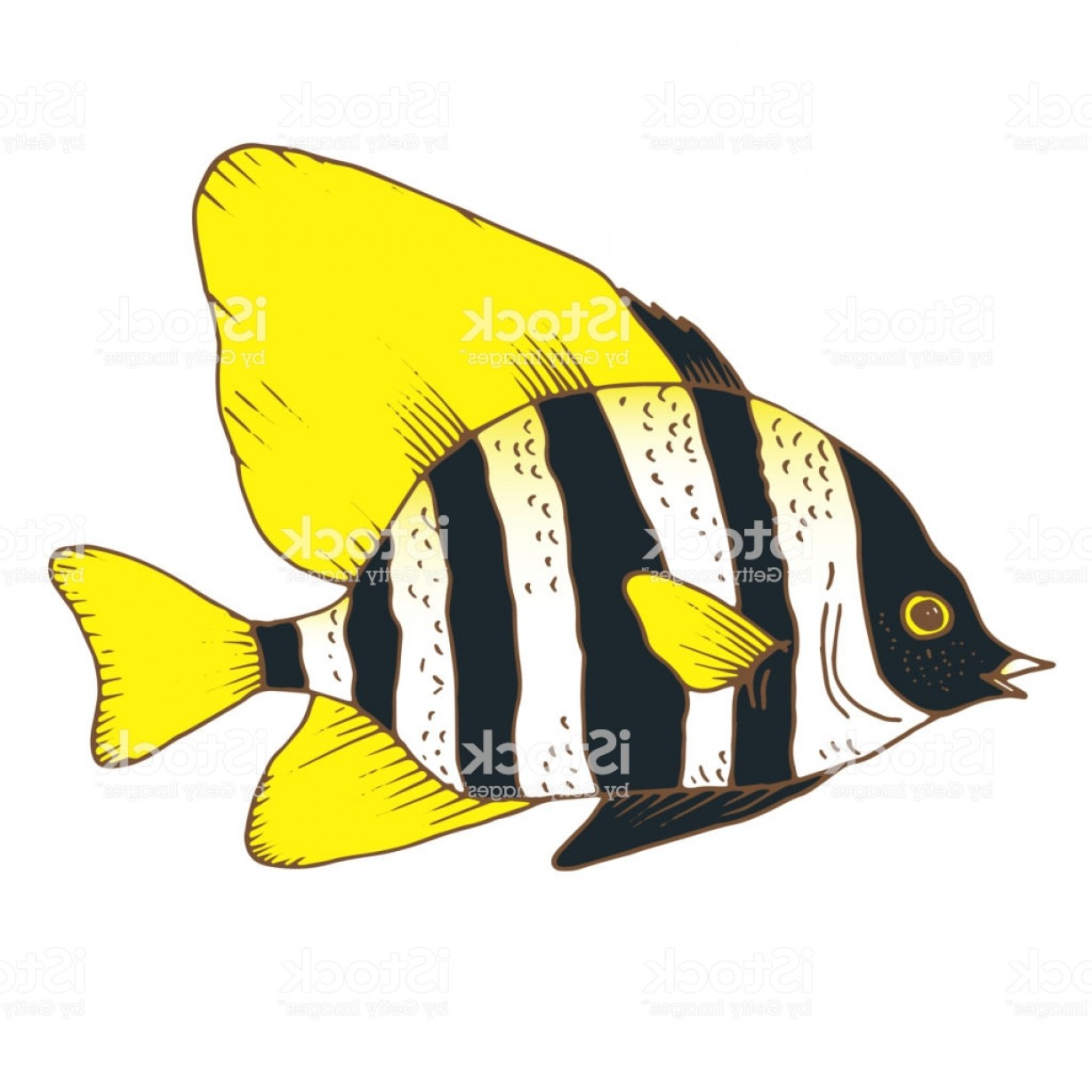 Mahi Mahi Outline Vector Images: Vector Zebra Fish Coral Fish Hand Drawn Colorful Illustration Gm