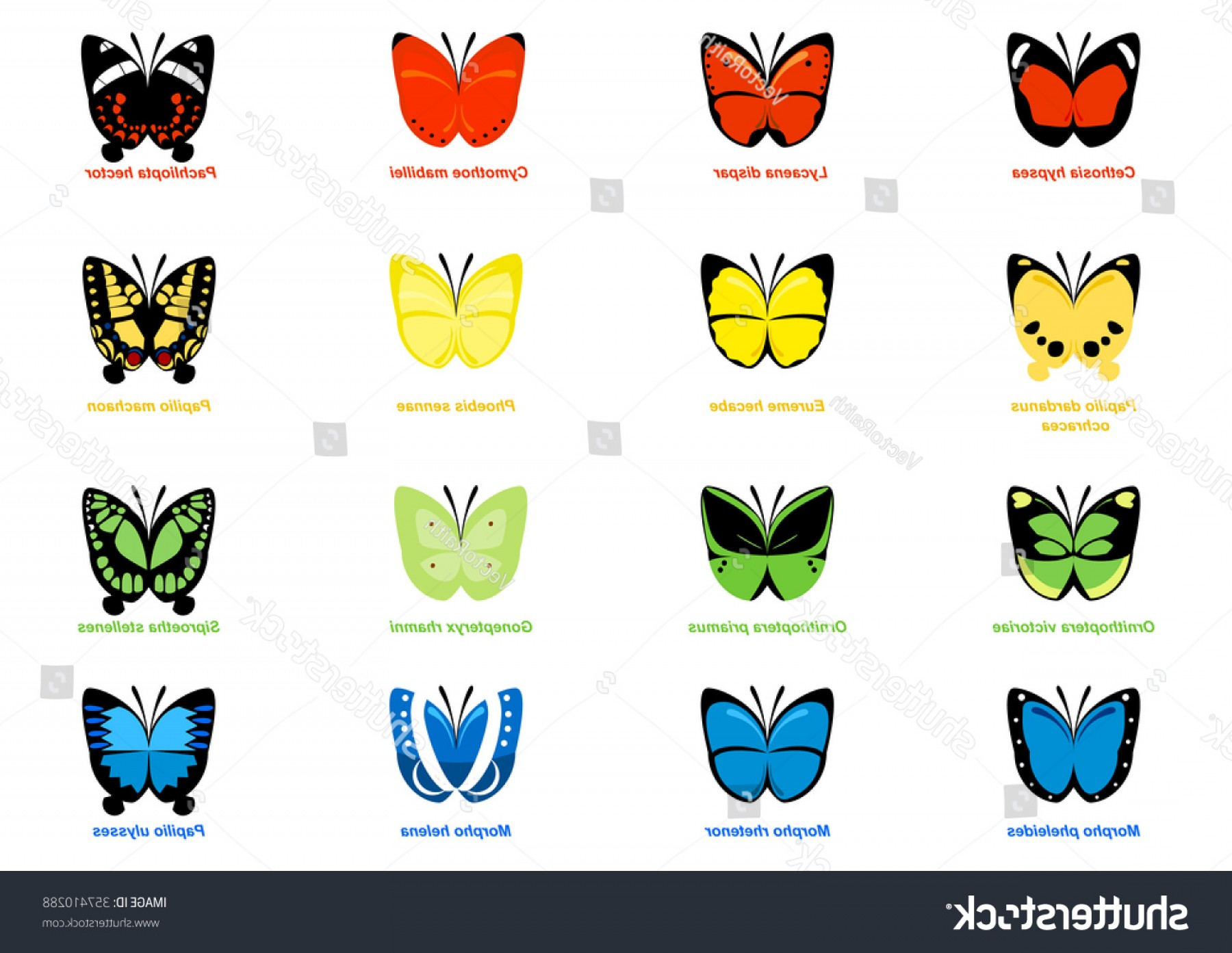 Real Butterfly Vector: Vectors Simple Butterflies Reallife Butterfly