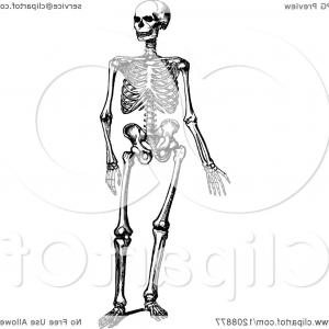 Hi Res Vector Human Skeleton: Vintage Black And White Human Skeleton