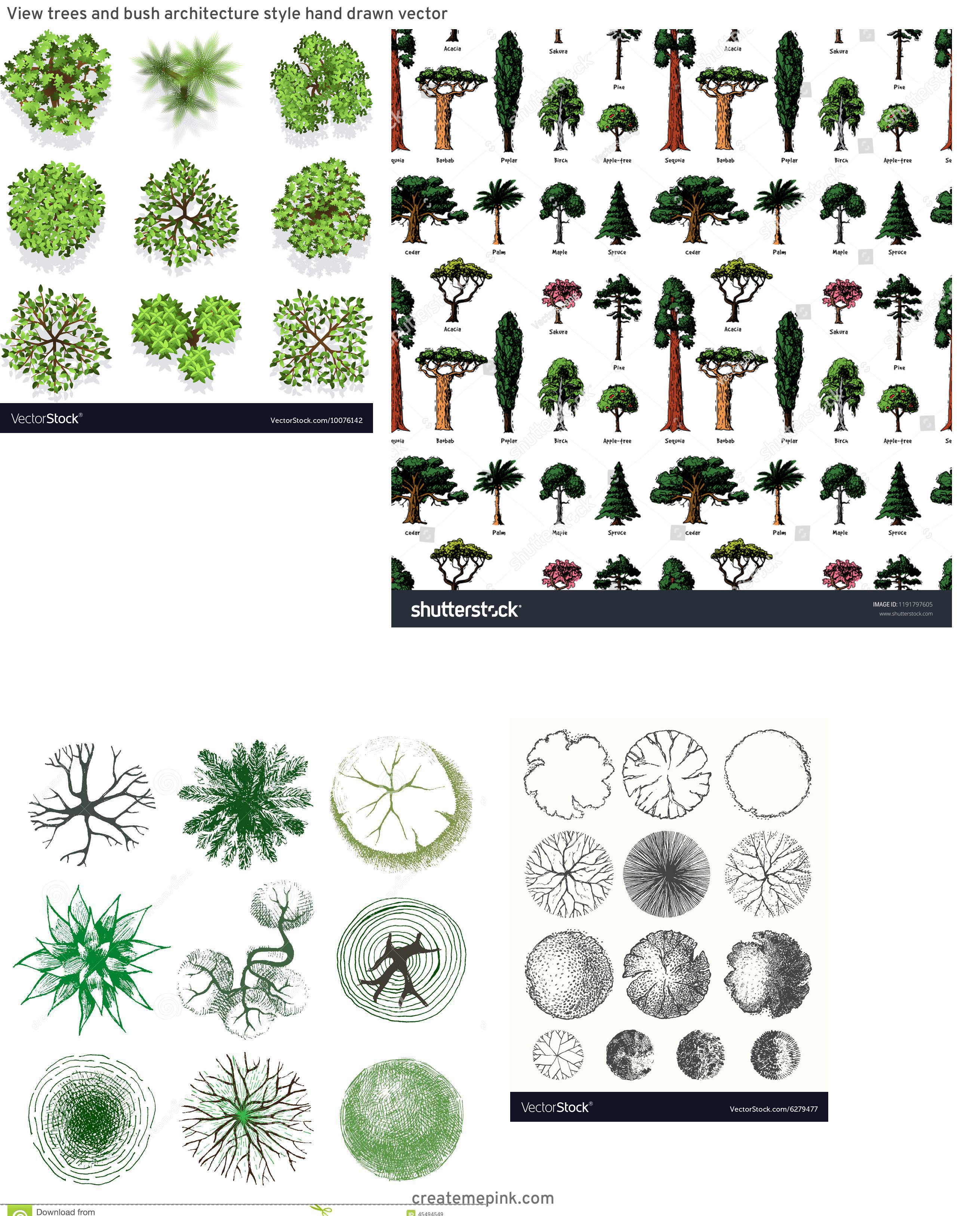 Drawn Free Vector Tree Tops: View Trees And Bush Architecture Style Hand Drawn Vector