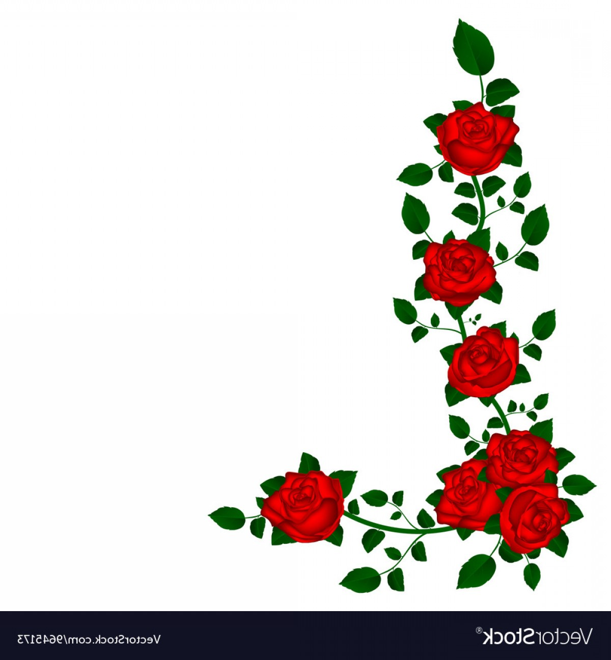 Vine Vector Graphics: Vine Of Red Roses Vector