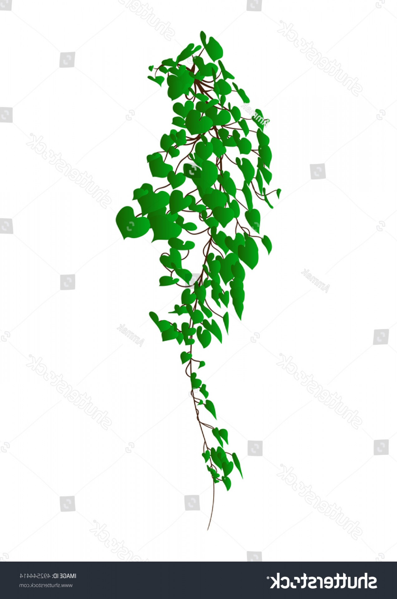 Vector Vine Tree: Vine Vector Plant Ivy Isolated On