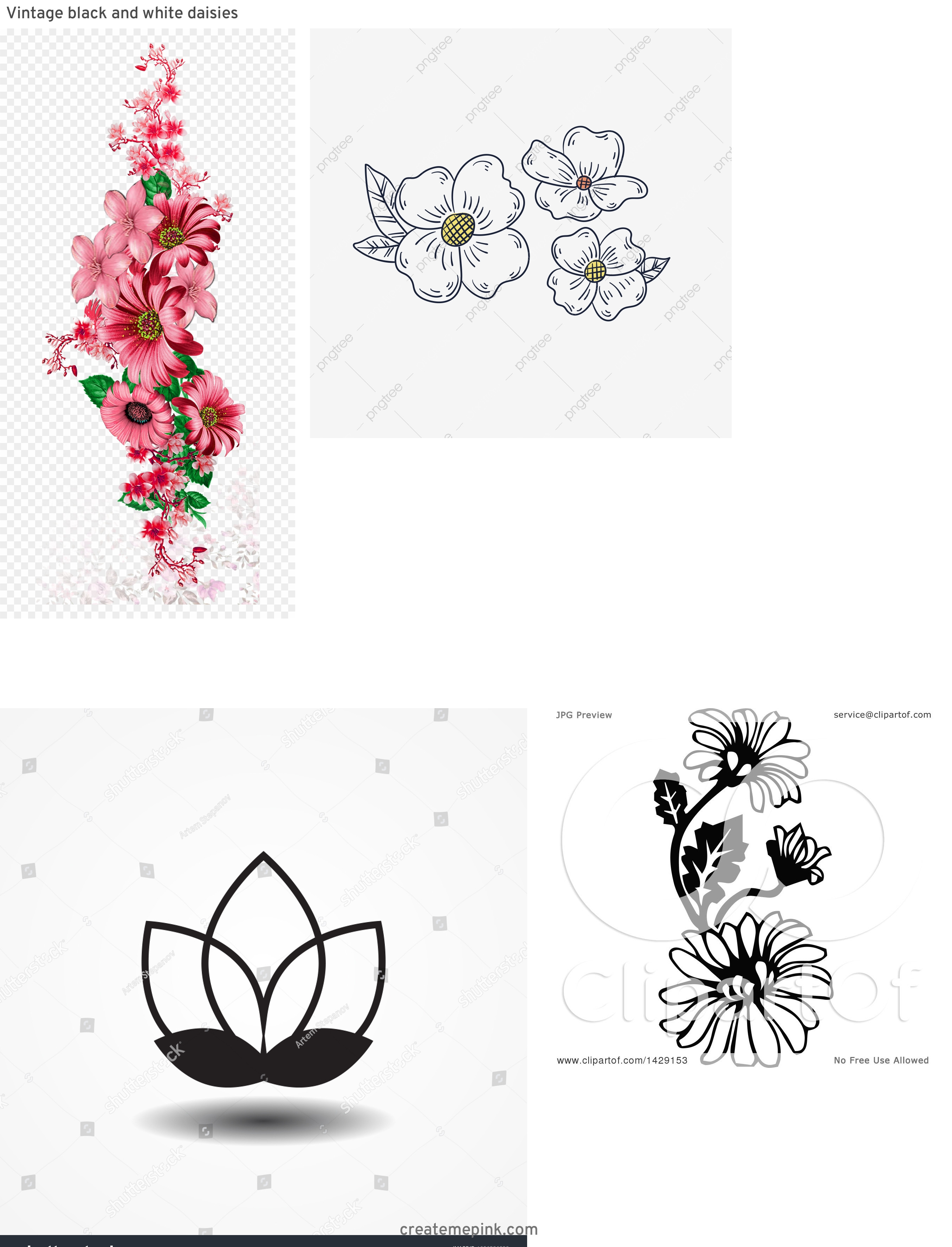 Flower Daisey Black Vector Art: Vintage Black And White Daisies