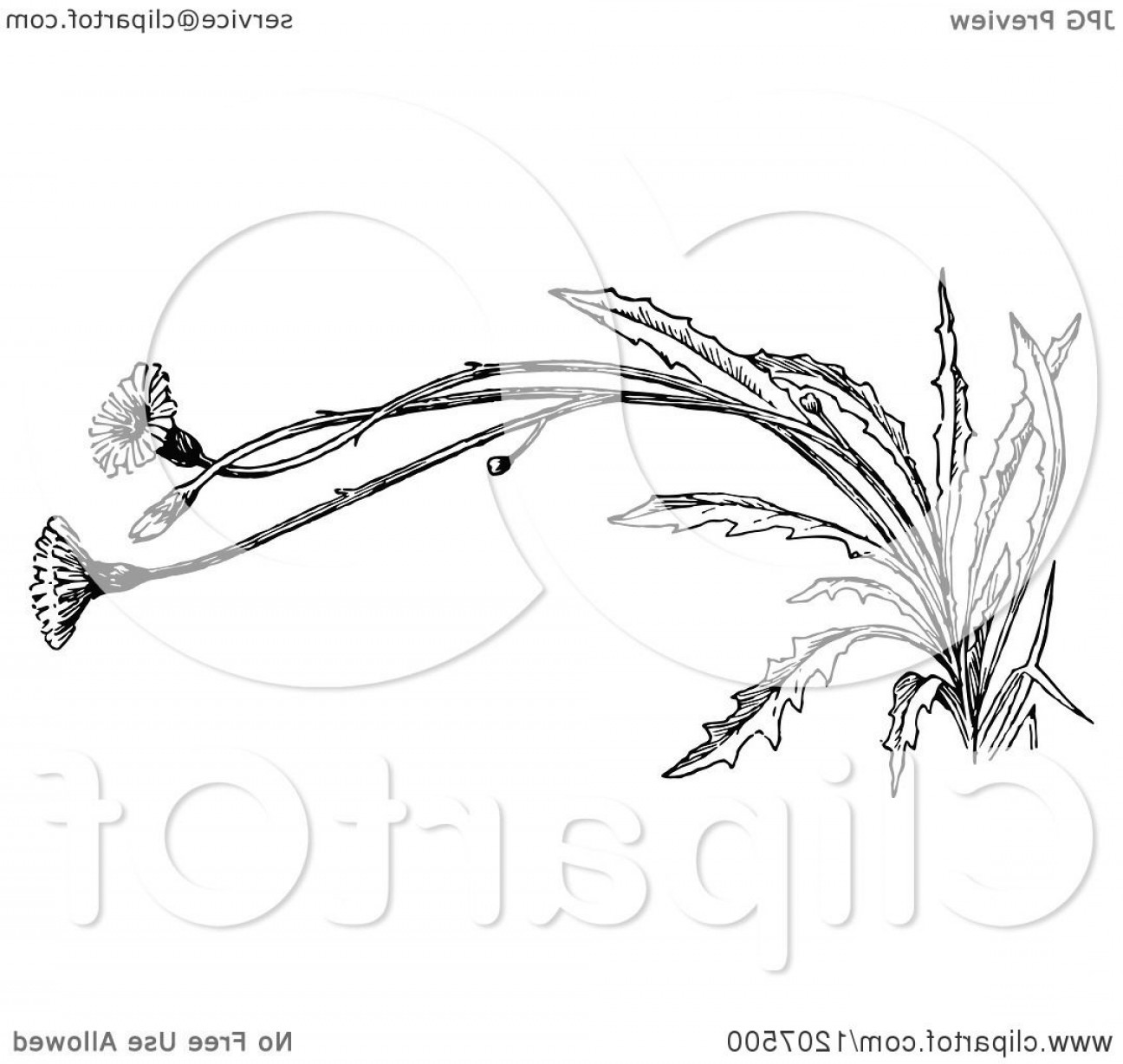 Black And White Vector Image Of Weed Plants: Vintage Black And White Flowering Weed