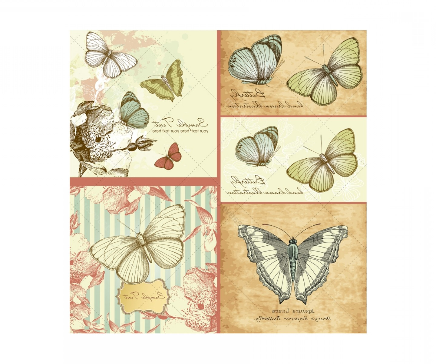 Butterly Vector: Vintage Butterfly Vector Illustrations