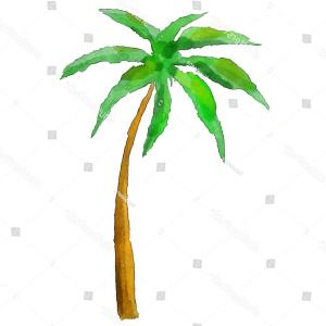 Watercolor Palm Tree Vector: Watercolor Palm Tree Isolated On White