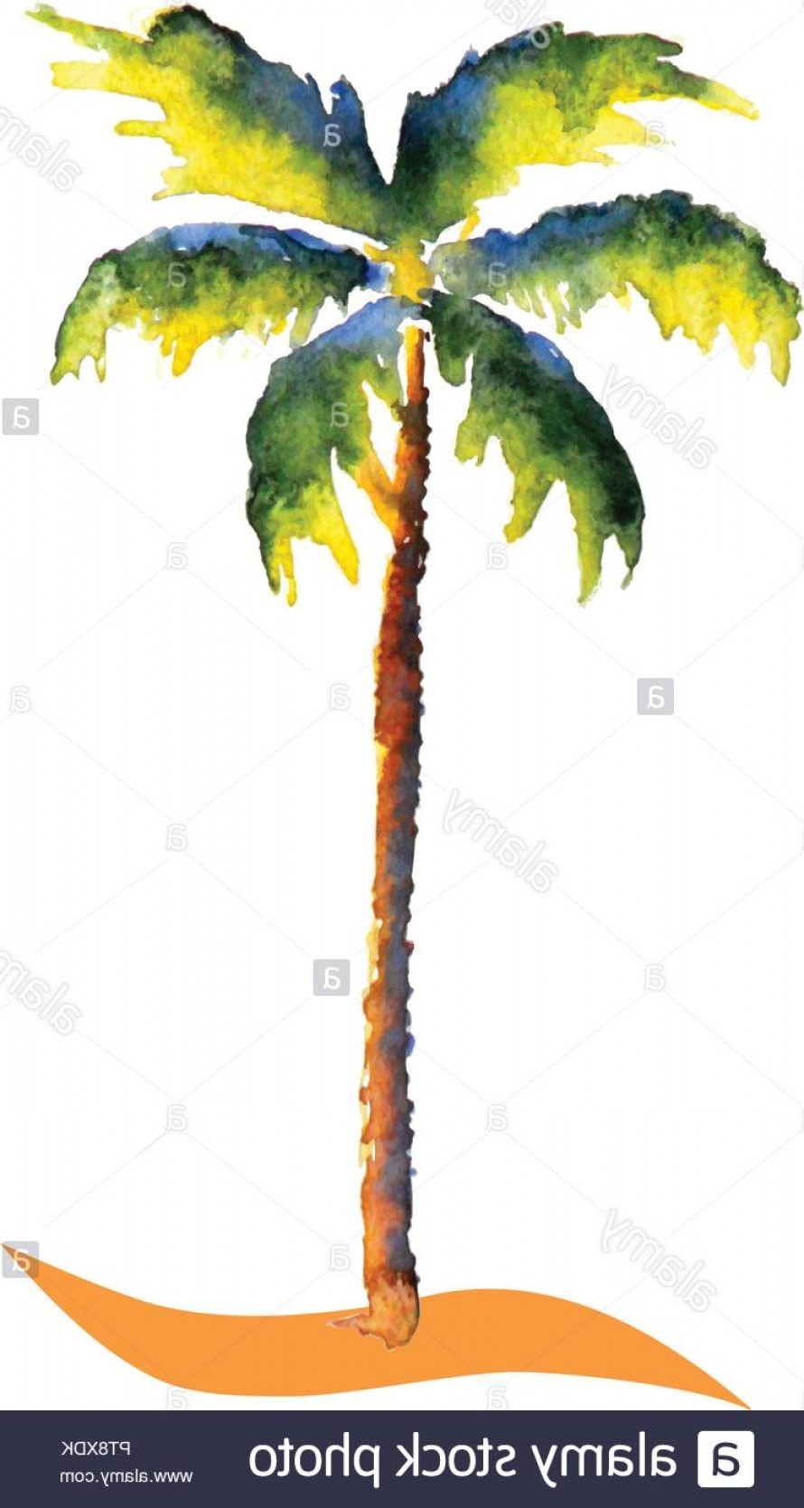 Watercolor Palm Tree Vector: Water Color Palm Tree Vector Tropic Picture Image