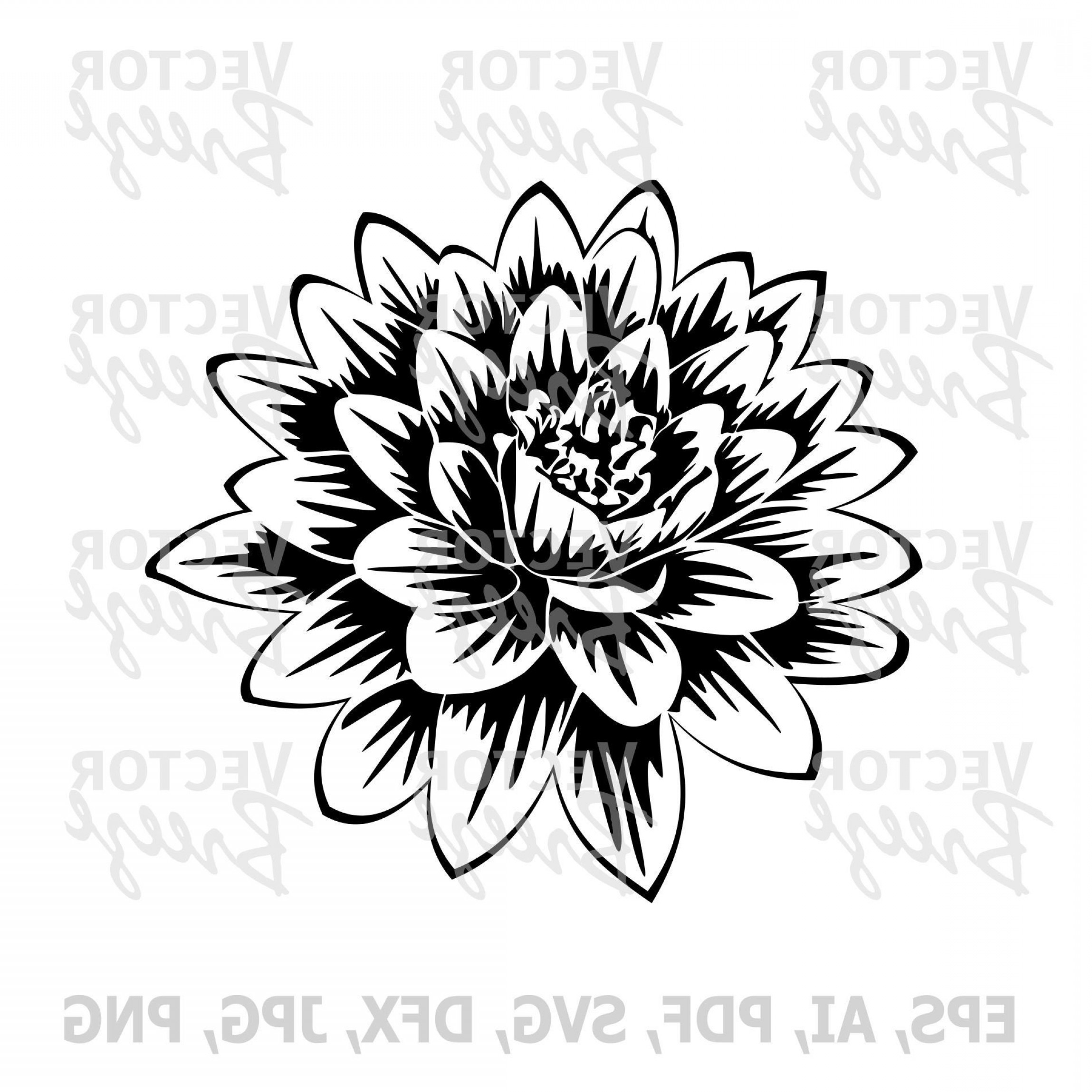 Lily Vector Art: Water Lily Flower In Light Original