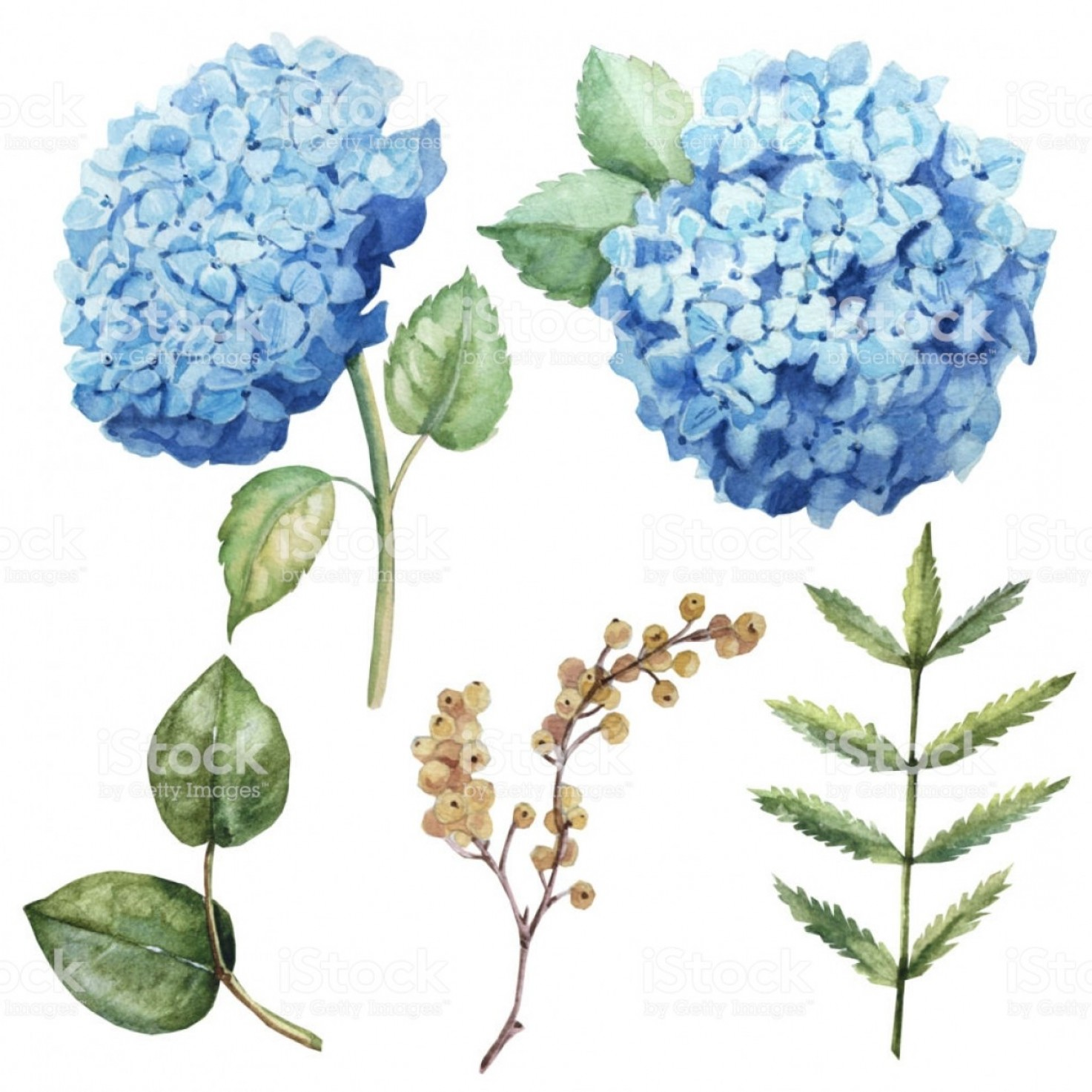 Vector Image Blue Hydrangeas: Watercolor Blue Flower Hydrangea Set With Leaves Gm