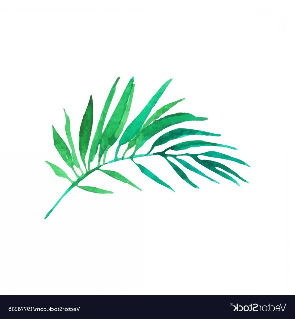 Watercolor Palm Tree Vector: Watercolor Green Palm Tree Branch With Leaves Stock Vector