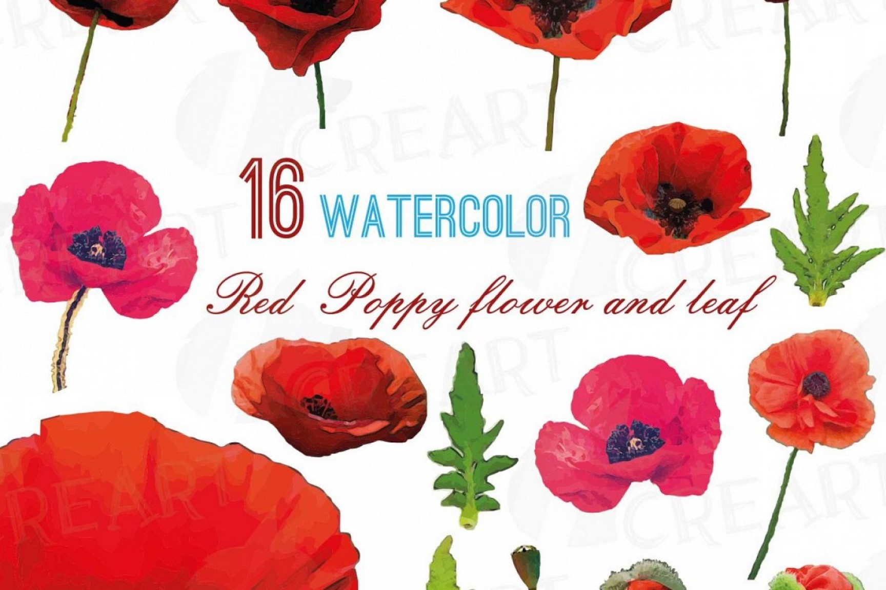 Corel Vector Clip Art: Watercolor Red Poppy Flower And Leaf Clip Art Pack Poppies Clip Art Png Jpg Svg Vector Illustrator And Corel Files Included