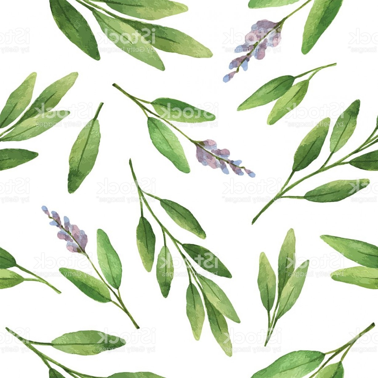 Sage Plant Vector: Watercolor Vector Seamless Pattern Hand Drawn Herb Sage Gm
