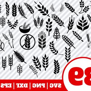 Wheat Flourishes Vector: Wheat Svg Bundle Wheat Clipart Wheat Vector Wheat Cricut