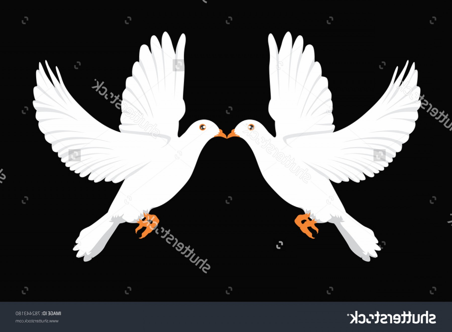 White Bird Vector: White Dove Bird Vector Illustration Two