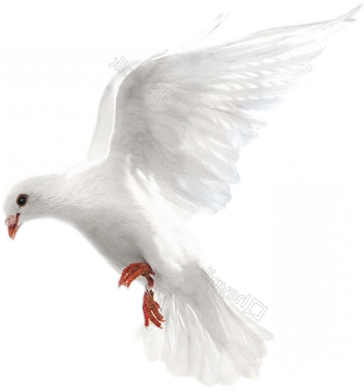Vector Wedding Doves 2: White Dove Of White Dove In The Air