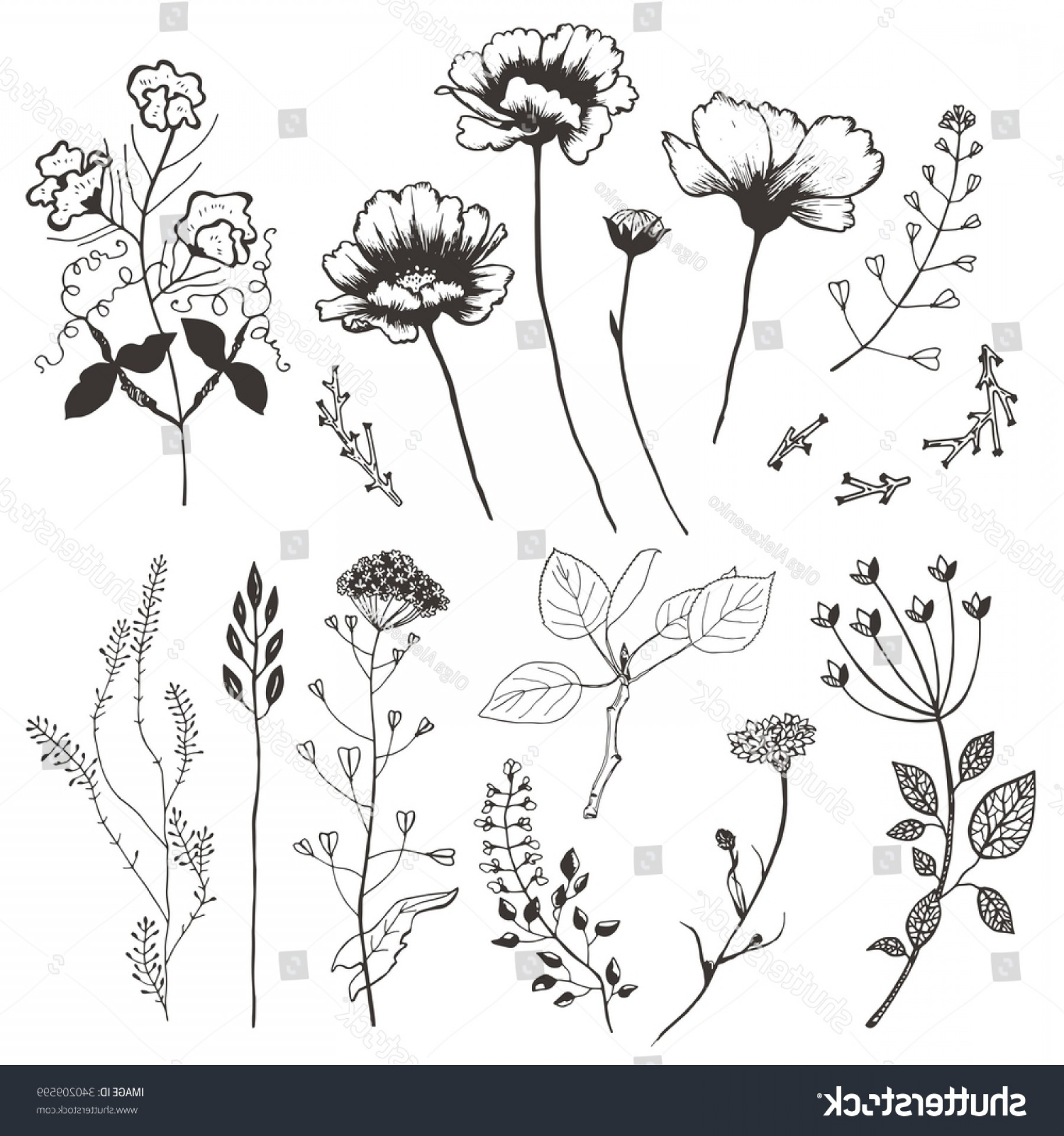 Wildflowers Outline Vector: Wildflowers Plants Hand Drawn Illustration