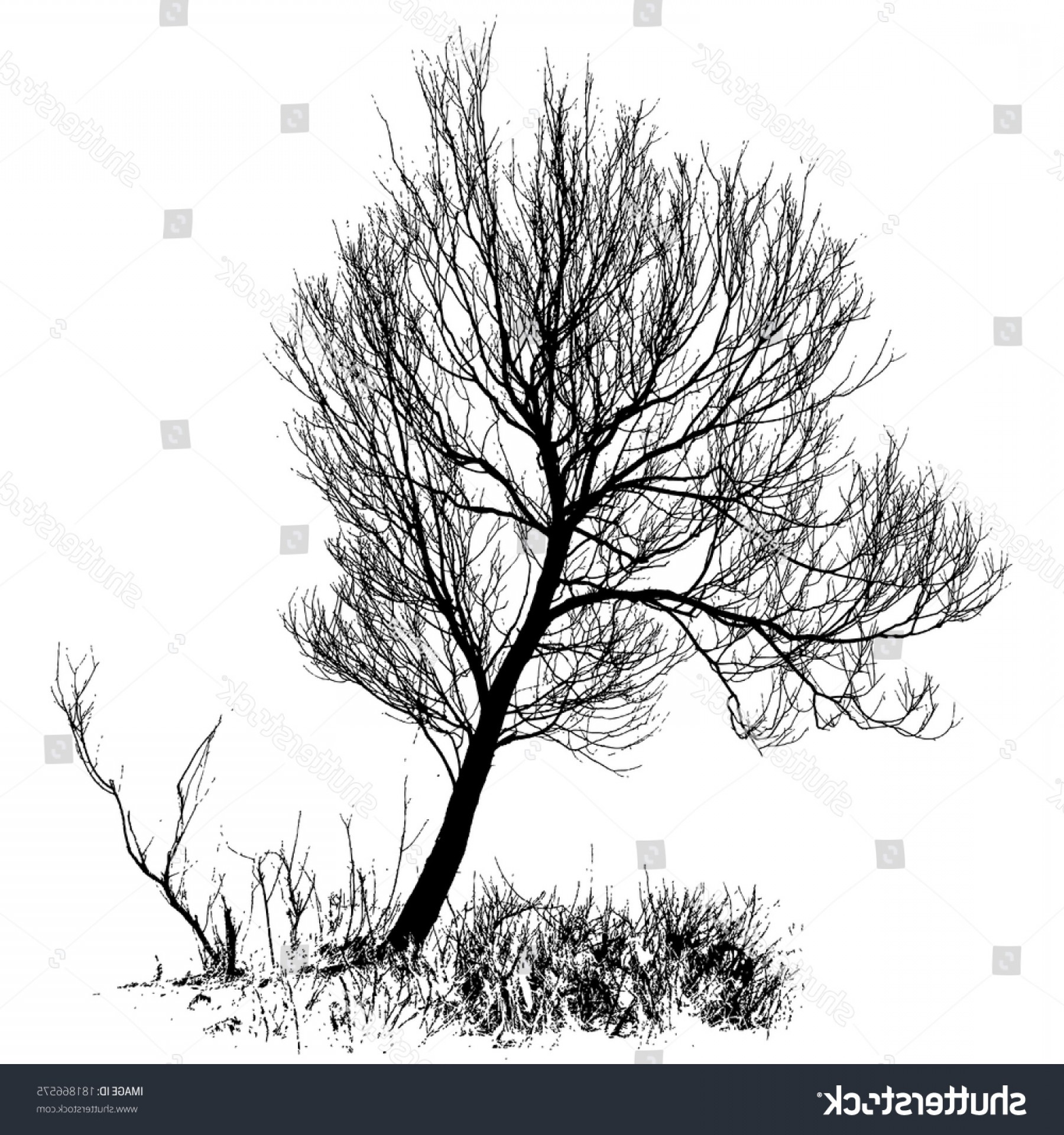 Vector Natural Willow: Willow Tree Bare Branches Full Size