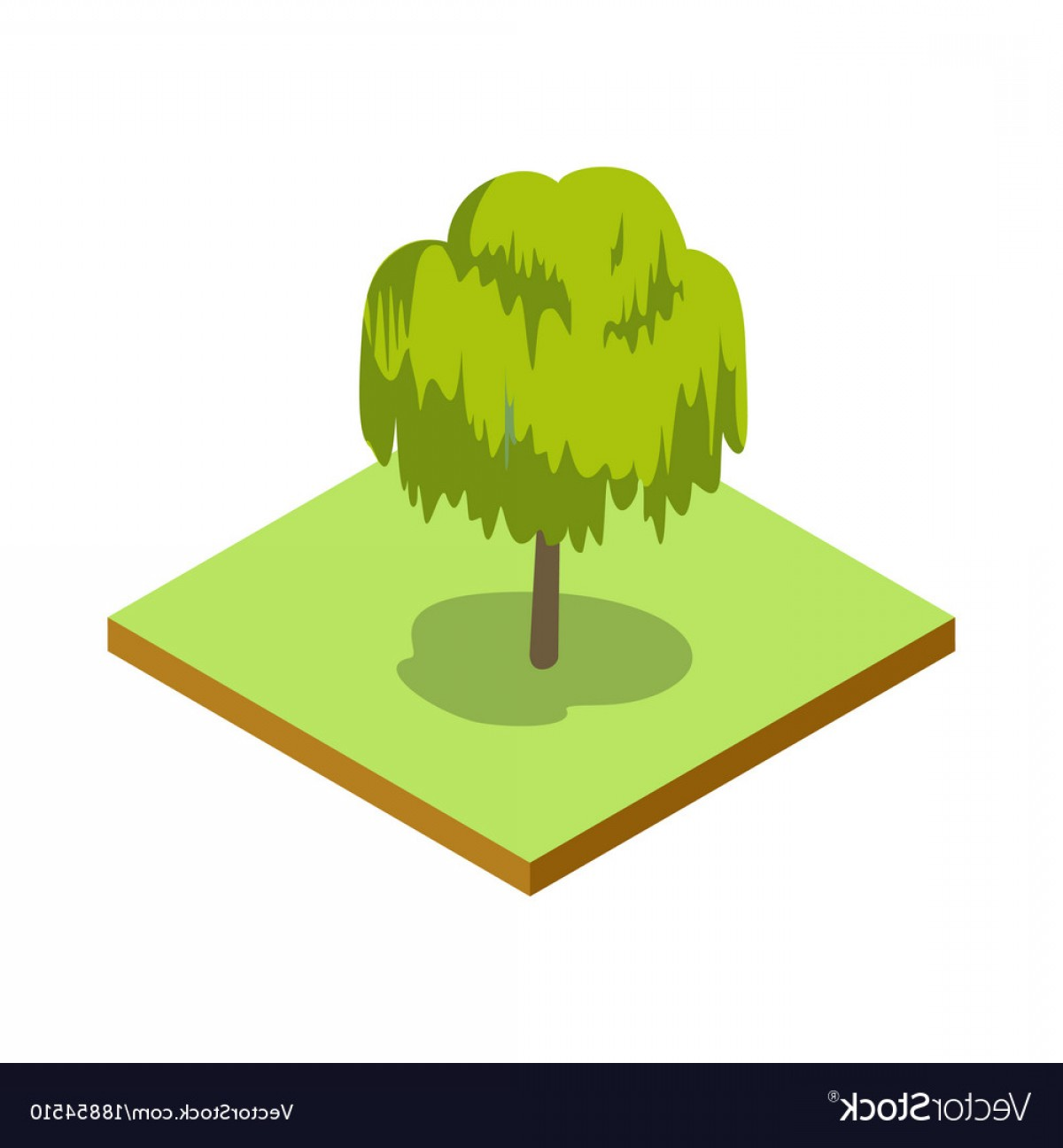 Vector Natural Willow: Willow Tree Isometric D Icon Vector