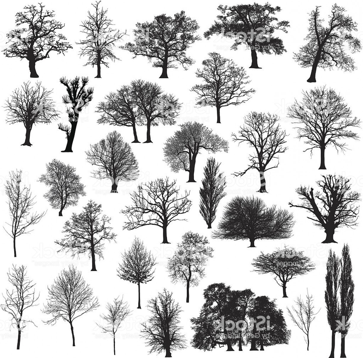 Sapling Vector Tree Silhouette Art: Winter Tree Silhouette Collection Gm