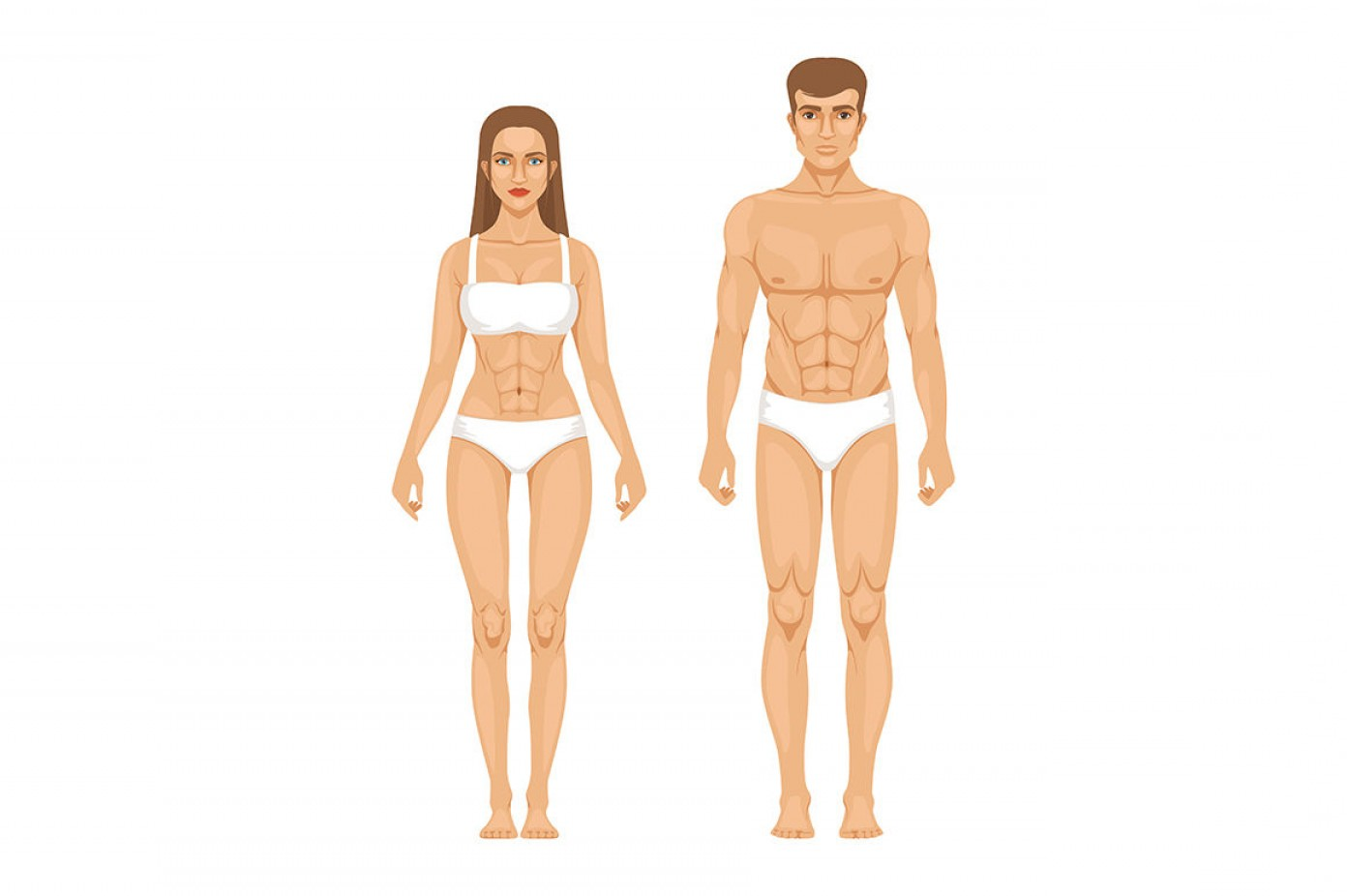 Female Parts Vector: Woman Body Parts Human Anatomy Vector Illustrations Isolate On White