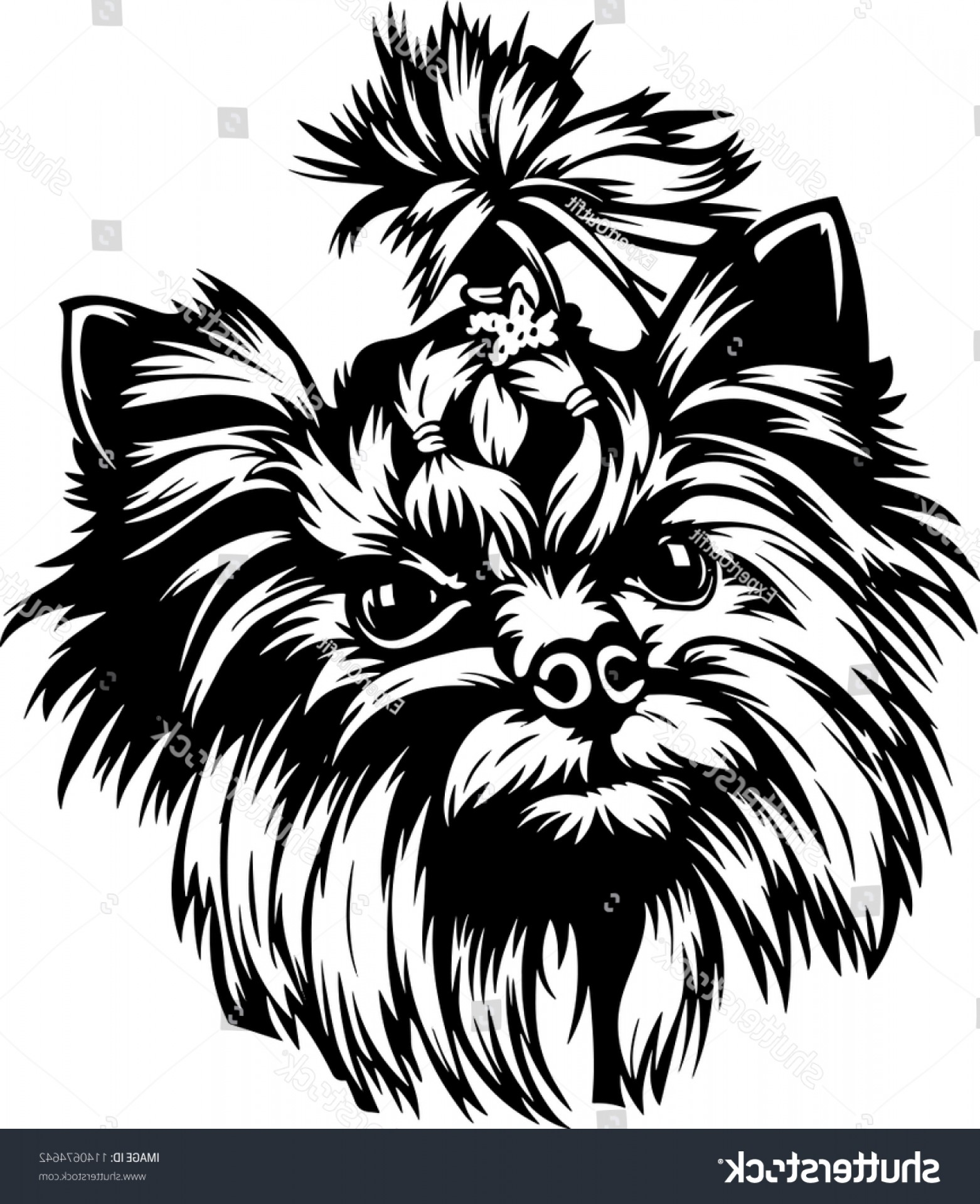 Cute Yorkie Dog Vector: Yorkshire Terrier Dog Breed Pet