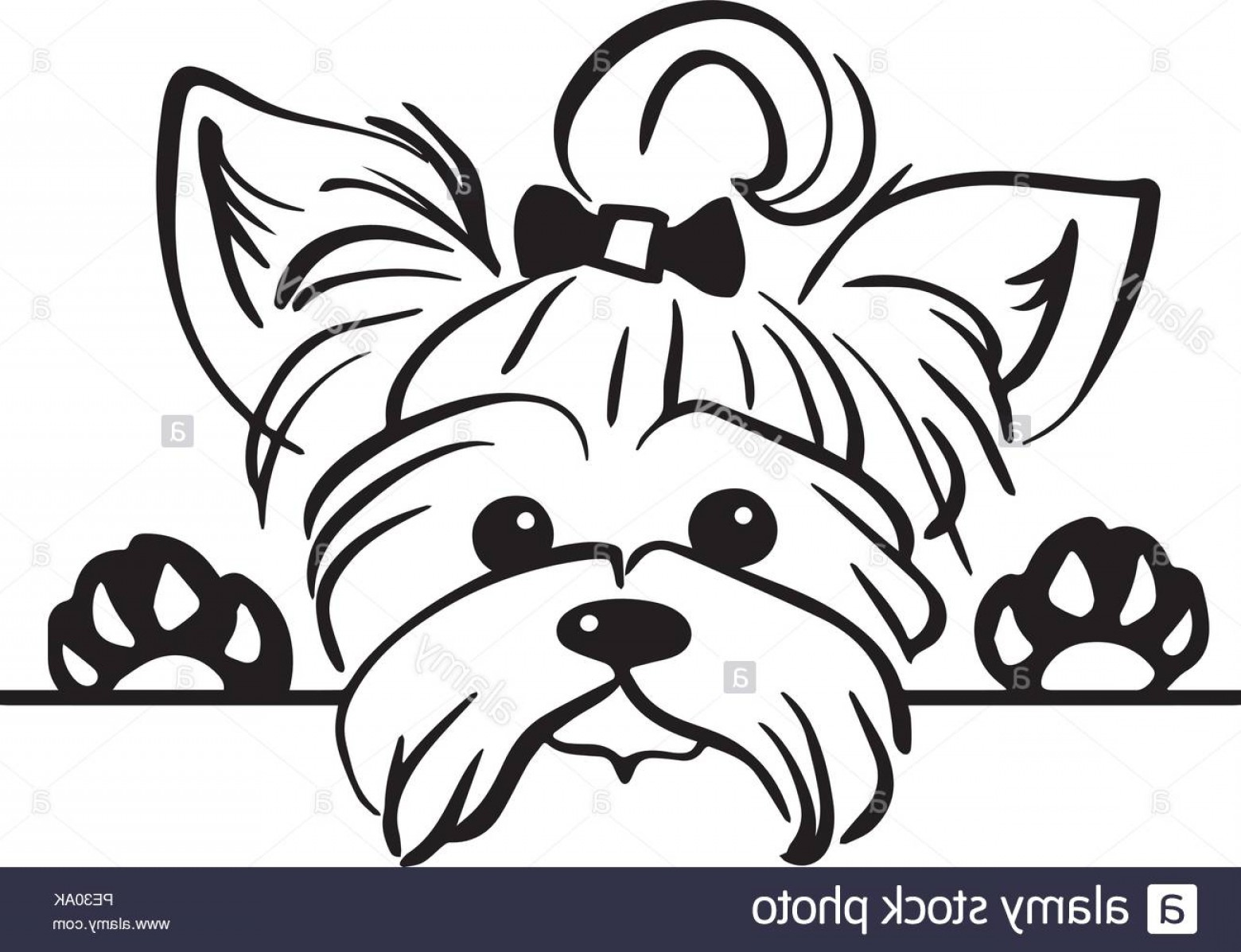 Cute Yorkie Dog Vector: Yorkshire Terrier Yorkie Dog Breed Pet Puppy Isolated Head Face Image
