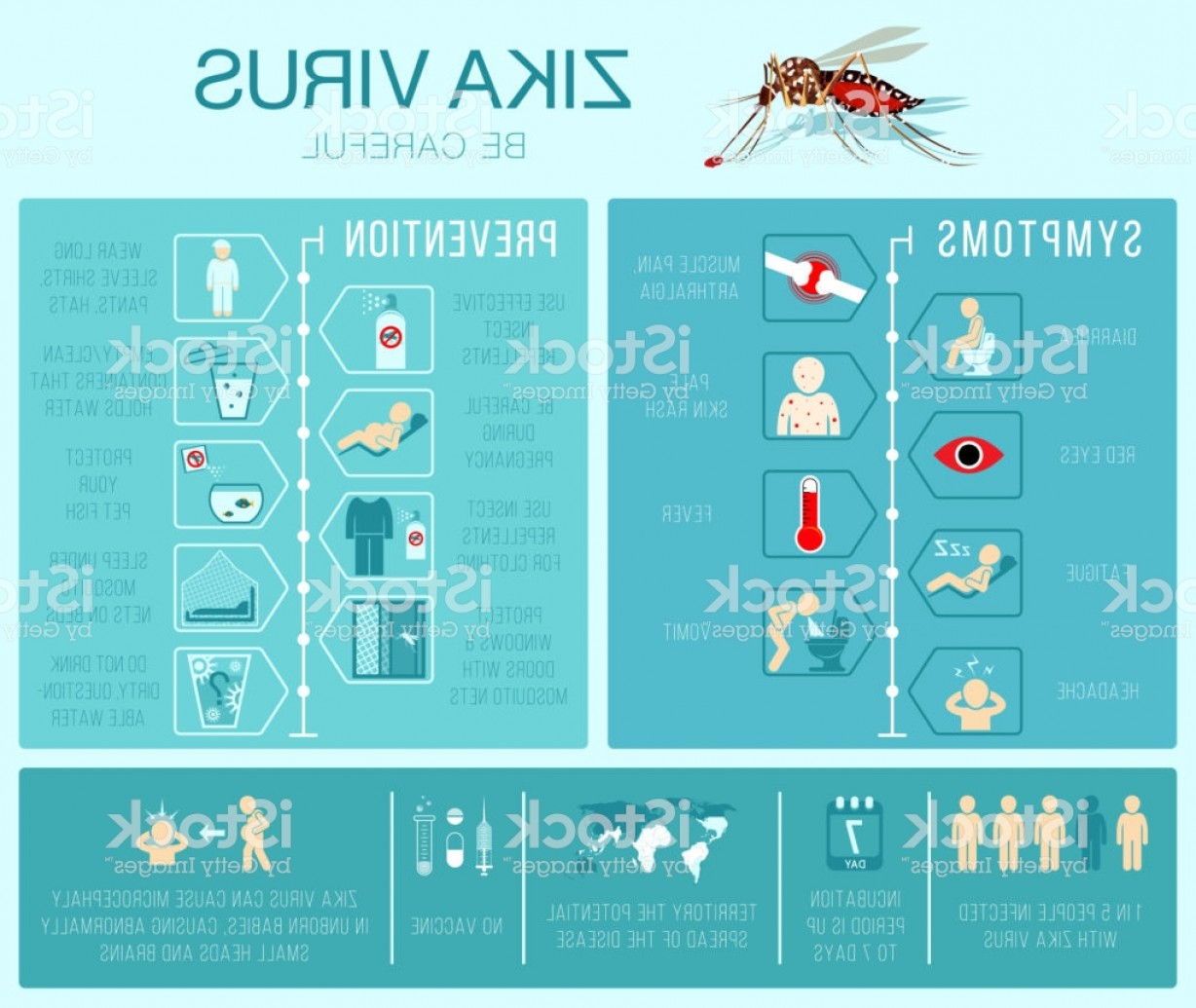 Vector Virus That Causes: Zika Virus Prevention And Symptoms Infographics Gm